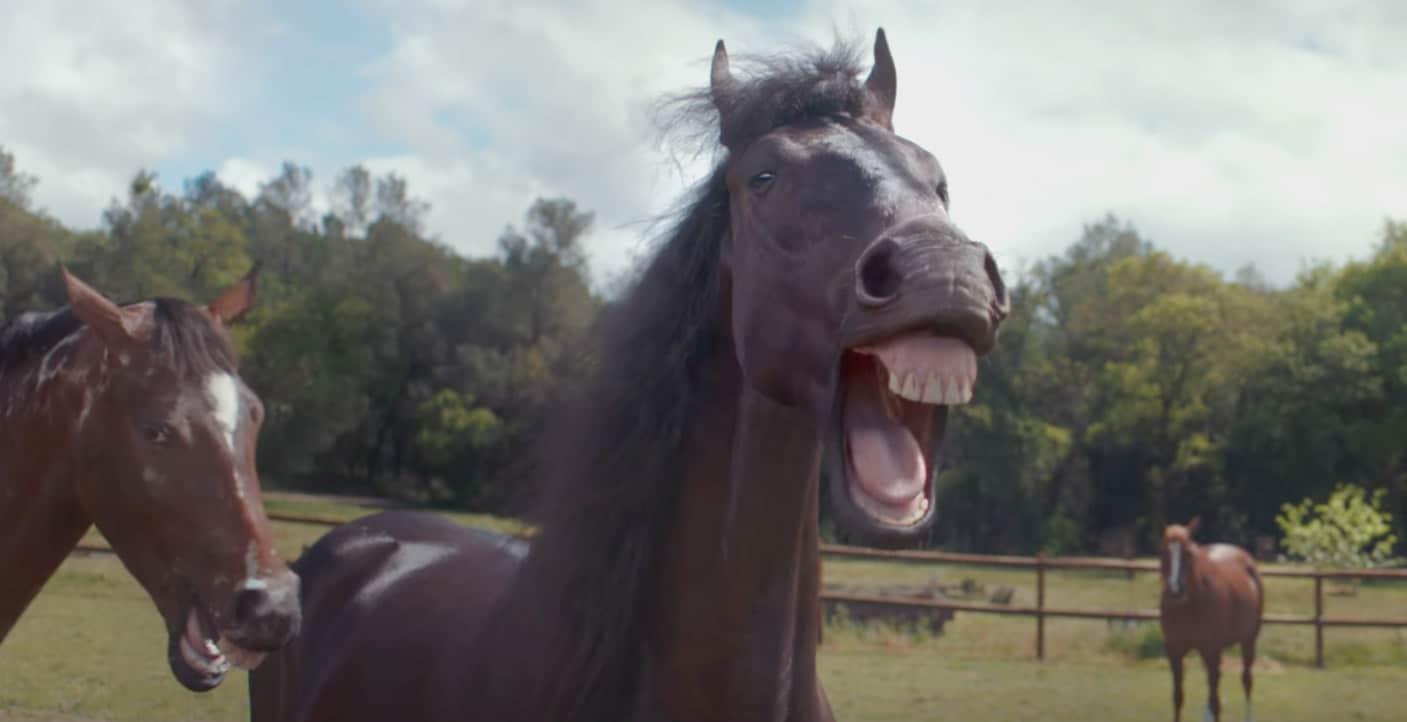 lachende pferde